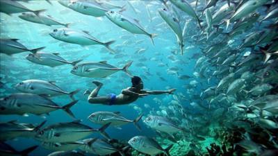 """Tìm hiểu đời sống của bộ tộc """"người cá"""" có thật và còn sót lại cuối cùng trên thế giới"""