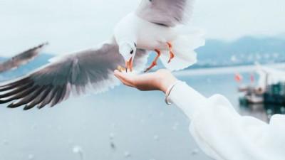 Cuộc sống là chuỗi ngày dài, chỉ mong được như loài chim di trú