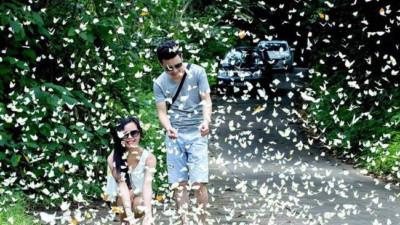 Clip nhóm thanh niên hả hê giẫm lên đàn bướm trắng ở Vườn Quốc gia Cúc Phương khiến CĐM bức xúc