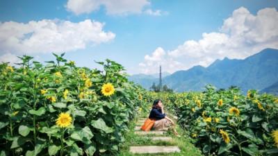 """Rủ nhau trốn nắng tại những """"khung trời"""" ngập tràn sắc hoa khắp đất nước trong mùa hè rực rỡ"""