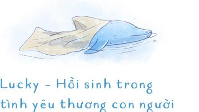"""Ba ngày kỳ diệu của Lucky - Em bé cá heo bị thương trôi dạt vào bờ biển và """"hồi sinh"""" nhờ những người tử tế"""