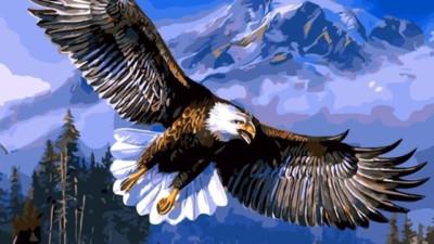 Phải sống như Đại Bàng: Luôn tránh xa những con chim sẻ và quạ, cũng như bạn phải tránh xa những người cản trở sự nghiệp của mình. Nên nhớ, Đại Bàng chỉ bay với những con Đại Bàng khác