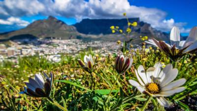 """Kinh ngạc trước """"Vương quốc Hoa"""" phải bị cháy rừng thì mới sống được của Nam Phi: Giàu thực vật gấp 3 lần Amazon ẩm ướt"""