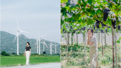 """Cánh đồng quạt gió và vườn dâu Ba Mọi tại Ninh Thuận: Hai địa điểm check-in """"siêu to khổng lồ"""", lại còn miễn phí nữa chứ!"""